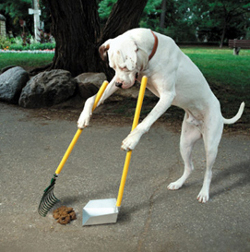 Licensed to Perform Surgery but Not Qualified to Clean Up Dog Poop